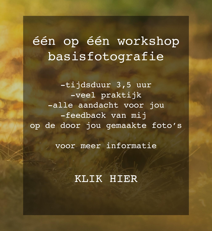workshop basisfotografie, diana thijssen fotografie, fotograaf broekhuizenvorst, fotograaf, horst, fotograaf Venlo, fotograaf Venray