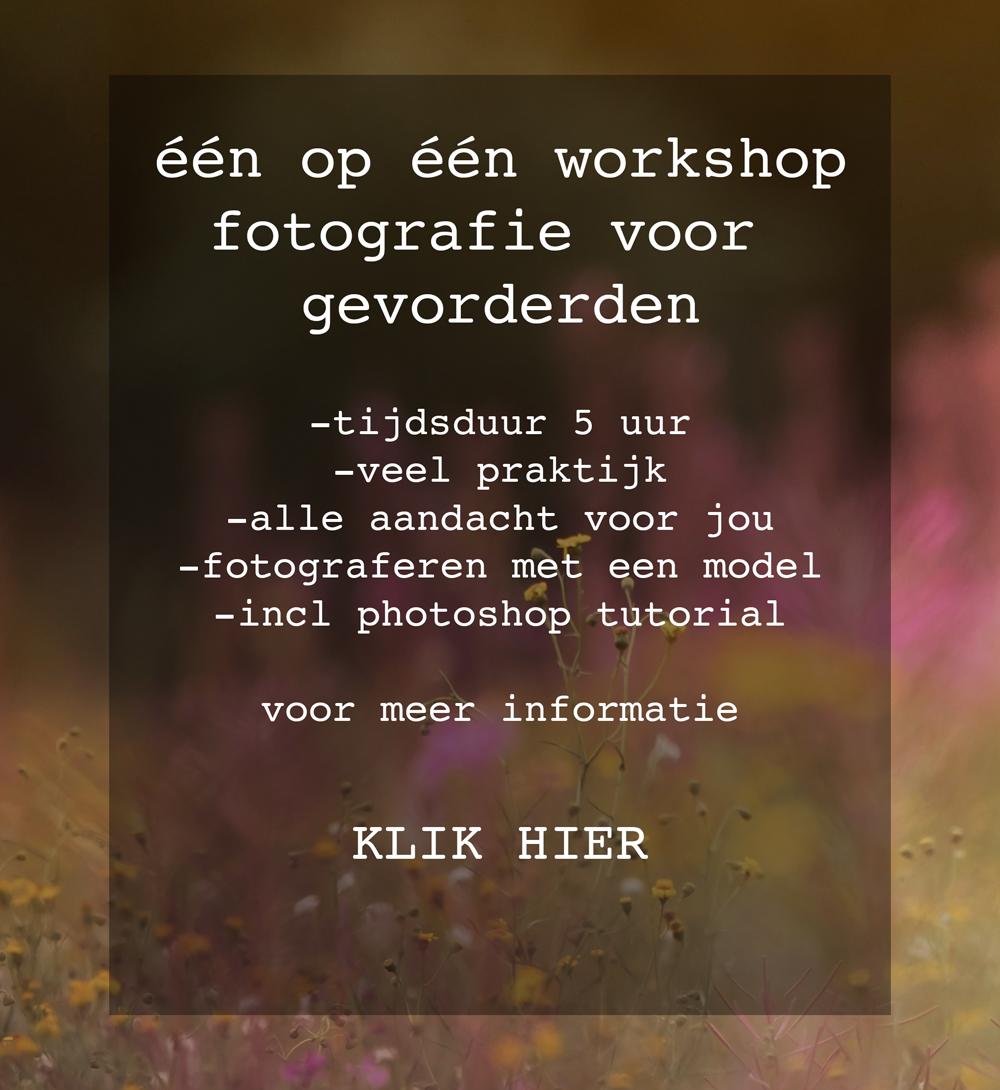 Diana Thijssen fotografie, workshop voor gevorderden, workshop fotografie, Venlo, Horst, Venray, Broekhuizenvorst